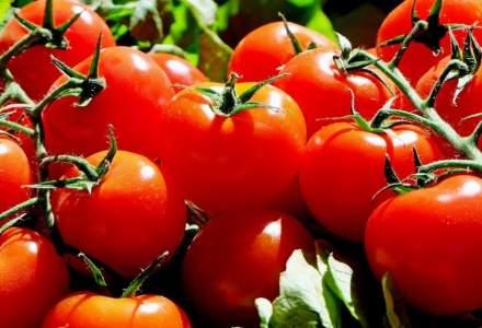 """Programul """"Tomata"""" continua si in 2020: beneficiarii trebuie sa valorifice o cantitate de 3 tone/1.000 mp."""