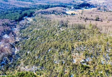 FOTO Cum arata padurile din Romania, puse la pamant de fenomene extreme. Peste 110.000 de hectare de paduri au fost distruse