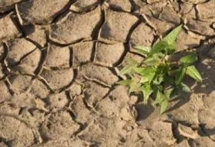 Fondurile mutuale salveaza fermierii de pierderile cauzate de seceta sau grindina