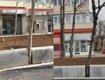 FOTO Arbori betonați sau...
