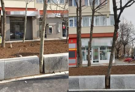 FOTO Arbori betonați sau prinși între borduri pe Șoseaua Giurgiului în cadrul lucrărilor de modernizare ale Primăriei Sectorului 4
