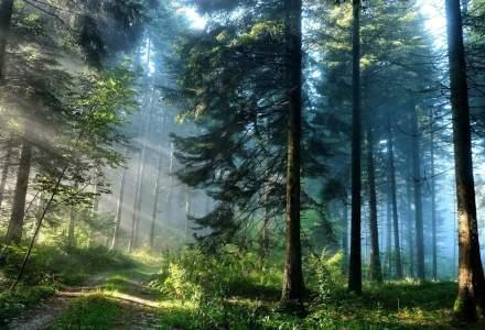 Cea mai mare tăiere ilegală de arbori din România
