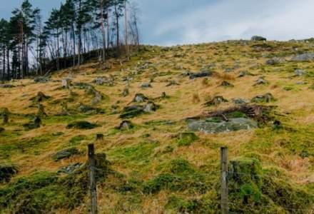 Împădurirea României: OMV Petrom contribuie cu 4,6 milioane de euro