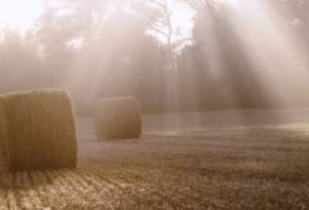 Ministerul Agriculturii: Fermierii care nu isi lucreaza terenurile nu vor primi subventii