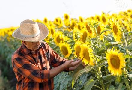 Care sunt cele mai frecvente boli care pot afecta cultura de floarea-soarelui și cum le combați
