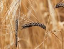 Ministrul Agriculturii vrea...