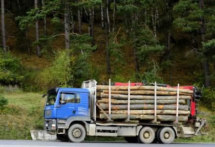 IGPR: 700 de controale şi peste 100 de dosare penale pentru tăierea ilegală de arbori