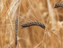 Ministrul Agriculturii...