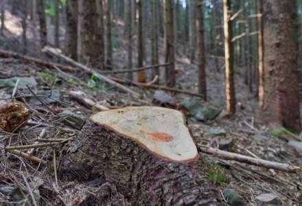 Lemn tăiat ilegal, în valoare de 90.000 de lei, descoperit de Garda Forestieră Suceava