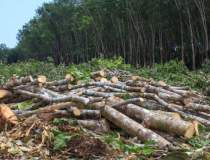 Galaţi: Furt de lemne,...