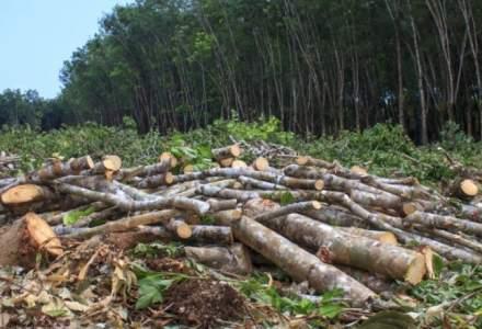 Galaţi: Furt de lemne, descoperit din elicopterul MAI