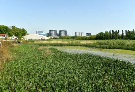 Consiliul General al Municipiului București ar putea aproba un PUZ privind construirea unor blocuri de maximum 14 etaje pe malul lacului Tei