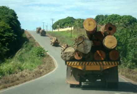 Statul a implementat un sistem care va monitoriza pădurile și va elimina escalele ilegale realizate cu același aviz