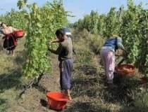 Record pe piata vinului:...