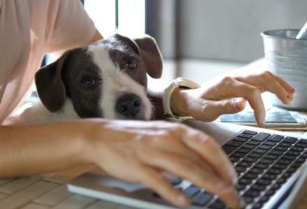 Sondaj PwC: Aproape jumătate dintre companii vor să aplice permanent munca de acasă