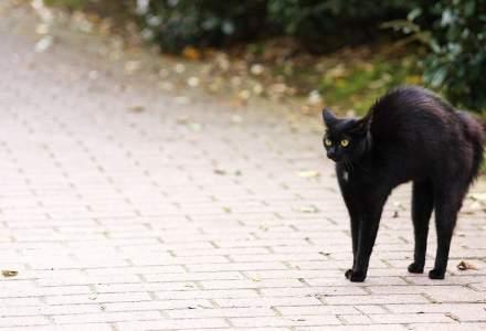 O pisică a fost testată pozitiv pentru noul coronavirus în Spania