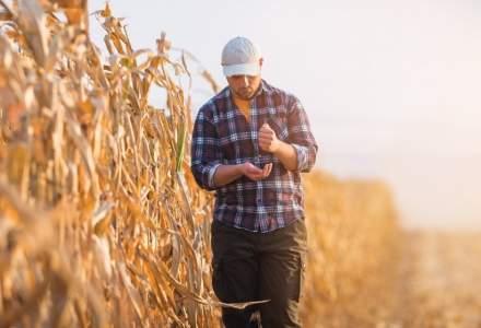 Aproape un milion de hectare sunt afectate de secetă în România