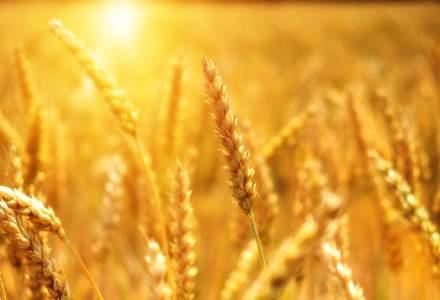 Departamentul american al Agriculturii: Producția de cereale a României va scădea cu până la 2,6% în sezonul 2020-2021