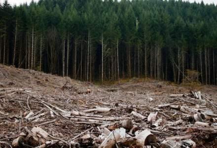 IGPR: 2.800 de metri cubi de material lemnos, confiscat de poliţişti în ultima săptămână