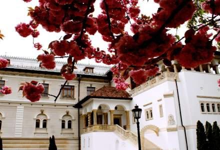 Muzeul Național Cotroceni reia activitatea de vizitare la finalul acestei săptămâni