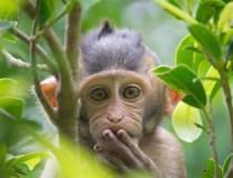 India: Maimuțele au atacat un...