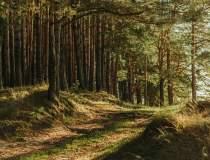 DNA-ul Pădurilor: Senatul a...