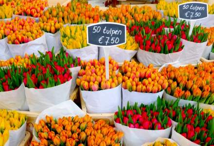 Exporturile de flori din Olanda se prăbuşesc, din cauza crizei Covid-19