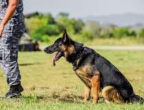Câini antrenați pentru a...