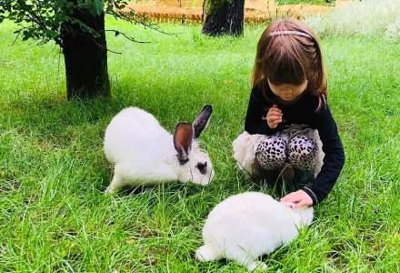 Vacanța de vară în natură: Cât costă să îți duci copilul în summer camp la grădinița din mijlocul pădurii