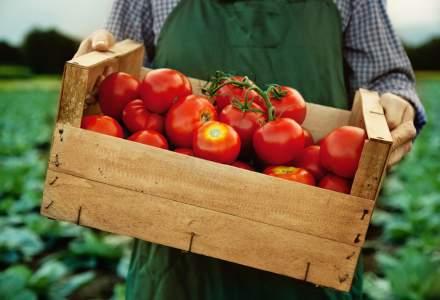Cum protejezi cultura de roșii pentru o recoltă bogată