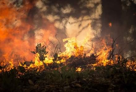 Focare și incendii de vegetație în Grecia
