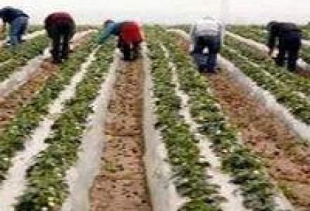 Germania a extins perioada de lucru pentru muncitorii sezonieri din Romania
