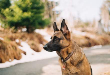 Primul câine testat pozitiv cu noul Coronavirus în Statele Unite a murit