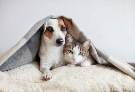 Studiu: COVID-19 se poate transmite de la oameni la câini și pisici