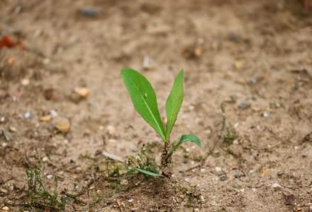 STUDIU: Europa se va confrunta cu secete puternice din cauza încălzirii globale