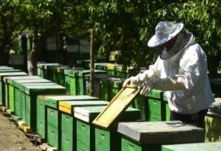 Europa risca o catastrofa alimentara: numarul albinelor a scazut dramatic