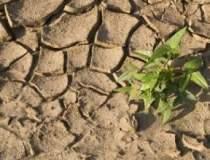 Perioadele de seceta din...