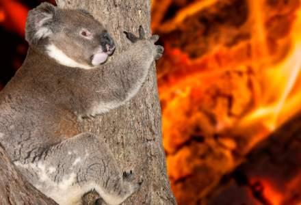 RAPORT: Incendiile de vegetație din Australia au fost intensificate de încălzirea globală
