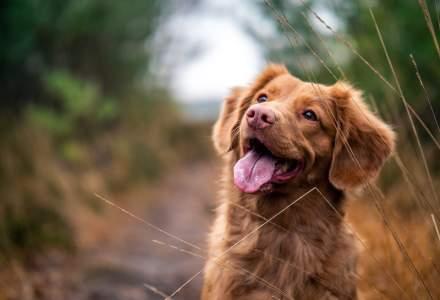 Se înființează Poliția Animalelor: autoritățile pot acționa fără mandat dacă un animal este torturat