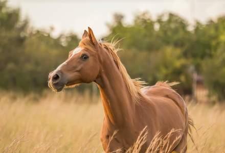 Costa Rica testează un tratament ieftin pentru COVID-19 bazat pe anticorpi proveniți de la cai