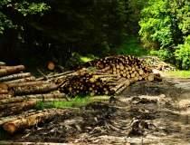 Defrișări ilegale în România:...
