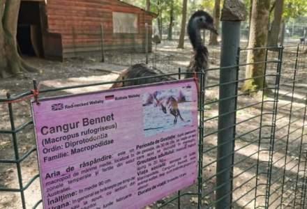Trei câini au intrat la Zoo Timișoara și au ucis toți cangurii