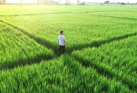Tinerii fermieri pot concesiona până la 50 de hectare din proprietatea statului