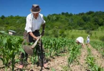 Securitatea alimentara, in fata unei noi amenintari: agricultura cu fermieri de peste 60 de ani?