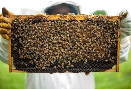 Ce fac apicultorii români când ajutorul de stat valorează cât un borcan de miere