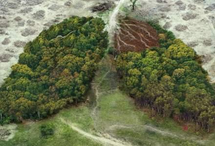 Comisia Europeană lansează o platformă de cooperare globală pentru combaterea defrişărilor