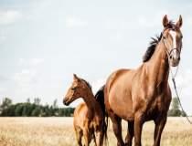 Cum a ajuns plasma de la cai...