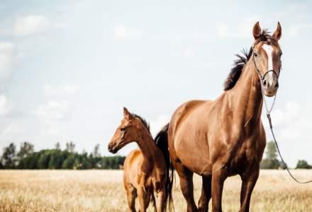Costa Rica: plasma recoltată de la cai este testată ca tratement împotriva COVID-19