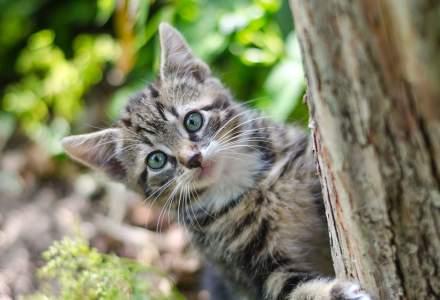 Țara în care pisicile nu sunt cele mai bune prietene ale omului. De ce mor oamenii din cauza felinelor