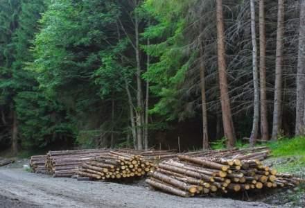 USR anunţă că va depune iar proiectul privind DNA-ul pădurilor